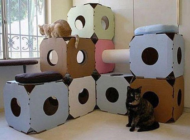 место для нескольких котов