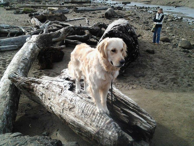 11 best the joys of living assistance dogs images on pinterest