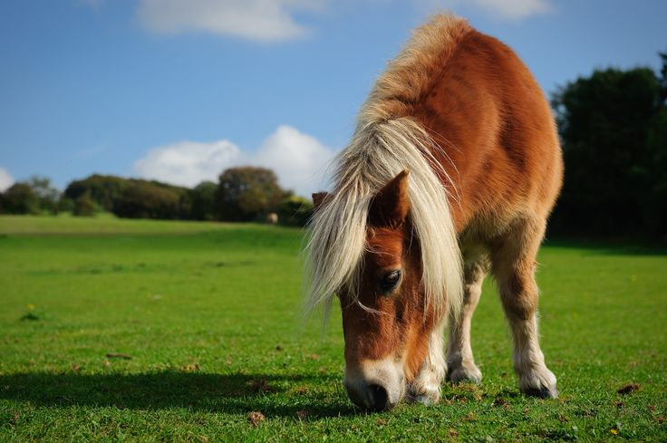 https://flic.kr/p/qeqn5Y   Cotswold Way, England, 2014   Pony and farmland on the Cotswold Way, England, 2014