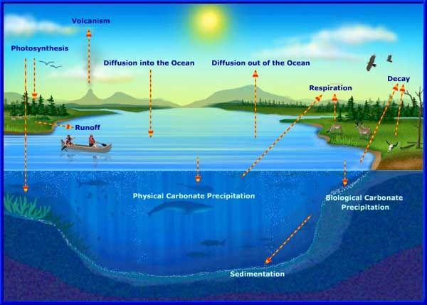 El ciclo del carbono | Artículos científicos | PlanetSEED