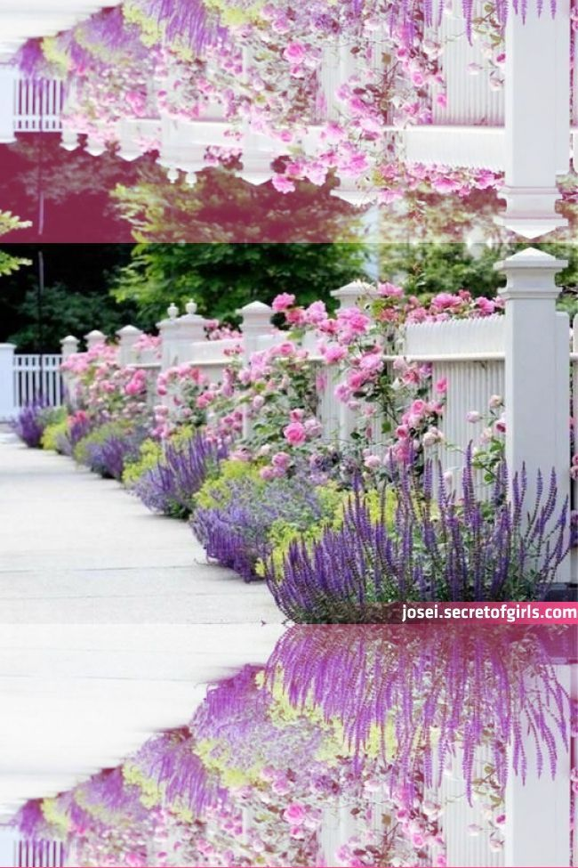 Walkers Low Catmint Lavender Garden Flower Bed Designs Front Yard Landscapin Bed Catmint Designs In 2020 Flower Bed Designs Lavender Garden Garden Flower Beds
