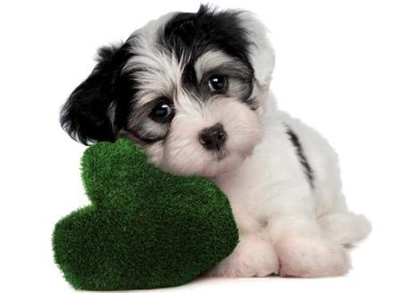 Gli hotel Best Western sono Pet Friendly! – Scopri le strutture che amano gli animali – Best Western Italia