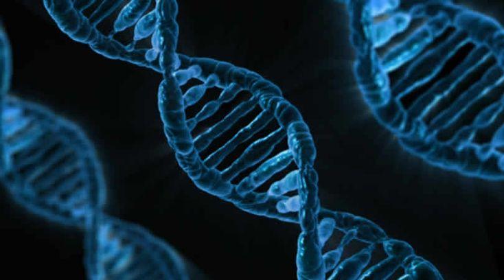 Die Wissenschaft der Epigenetik
