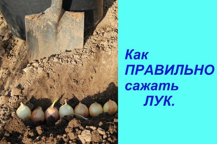 Как ПРАВИЛЬНО сажать ЛУК. | Planting Onions.