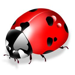 iPhone programming is like a ladybug - fun and only a little scary!