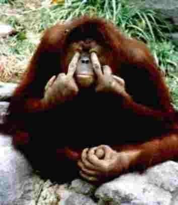 middle finger pics | Finger Monkey