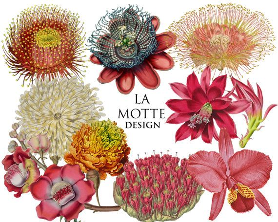 flower clipart exotic flowers clipart of by Lamottedesign on Etsy