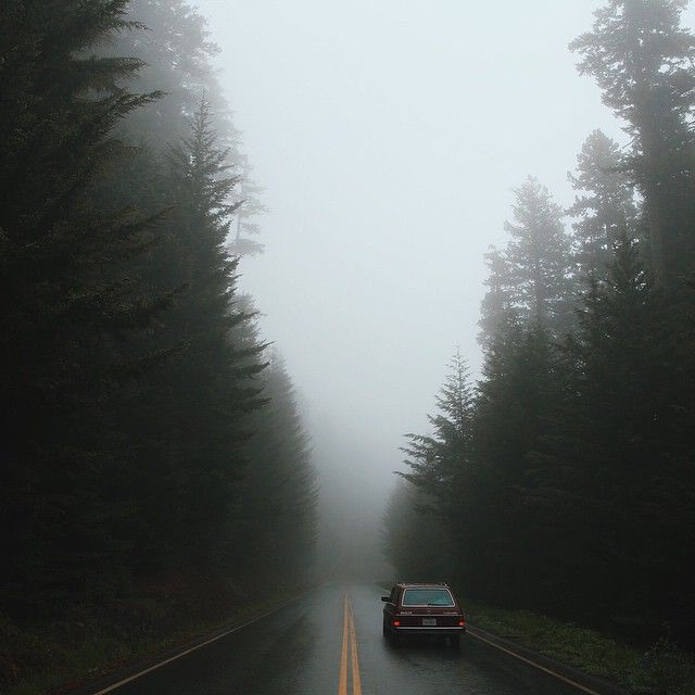 The beautifully foggy Pacific Northwest, captured by Emily Blincoe