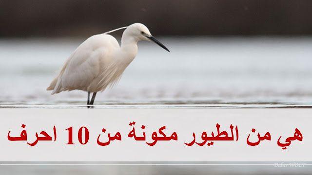 كلمة السر هي من الطيور مكونة من 10 احرف Bird