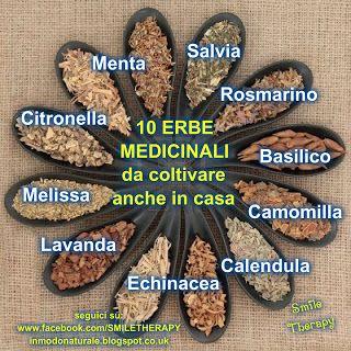 10 Erbe Medicinali che puoi coltivare sul tuo balcone  BLOG:  http://inmodonaturale.blogspot.co.uk/2013/04/10-erbe-medicinali-che-puoi-coltivare.html