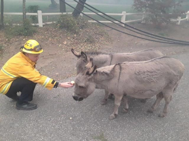 Touching Photos Show Firefighters Comforting Two Donkeys Fleeing