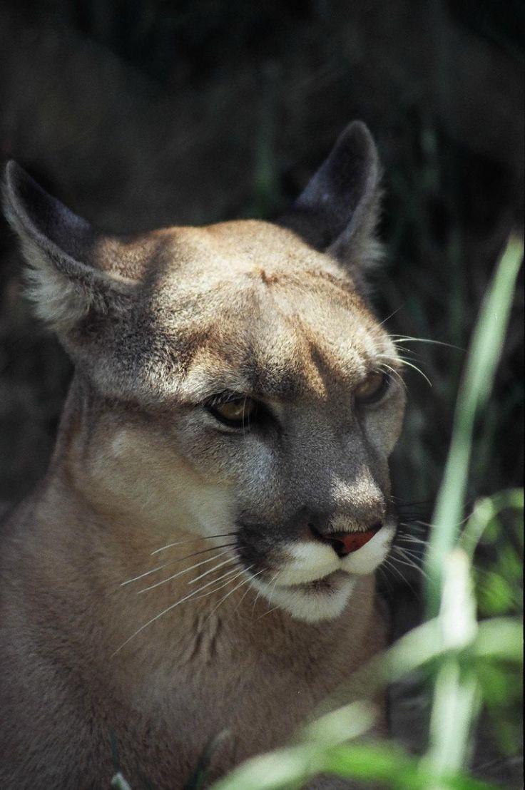 Living Desert Zoo and Gardens State Park - Carlsbad - Reviews of Living Desert Zoo and Gardens State Park - TripAdvisor