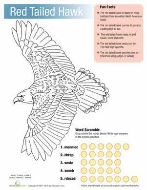 Facts About Red-tailed Hawk | red-tailed-hawk-facts-spelling.gif