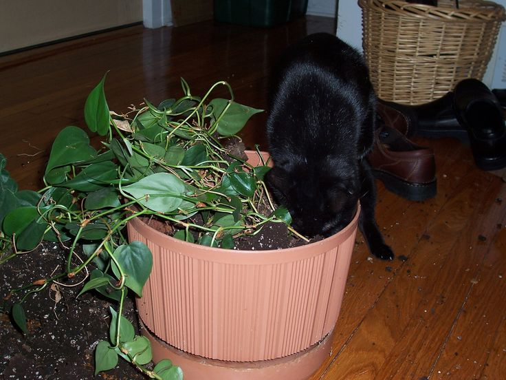 Safeguarding Plants From Cats How To Keep Cats Out Of