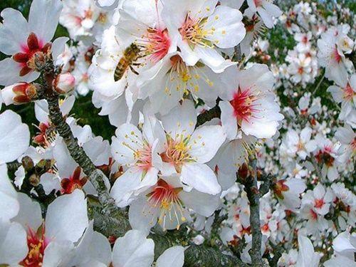 Gyönyörű jácintok,Gyönyörű rózsák,Csodaszép rózsa,Gyönyörű szép tulipán,Csodaszép tulipán,Tavaszi virágzás,Gyönyörű tavaszi virágok,Orgonavirágzás,Csodaszép dáliák,Nárciszok és györgyikék, - jpiros Blogja - Állatok,Angyalok, tündérek,Animációk, gifek,Anyák napjára képek,Donald Zolán festményei,Egészség,Érdekességek,Ezotéria,Feliratos: estét, éjszakát,Feliratos: hetet, hétvégét ,Feliratos: reggelt, napot,Feliratos: egyéb feliratok ,Finomságok, kávék,italok képei,Gyász, emlékezés…