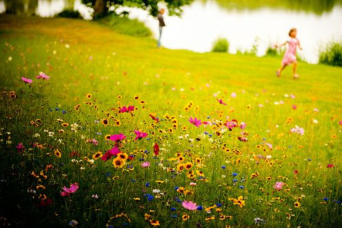 Beautiful colourInspiration, Happy Day, Beautiful, Vibrant Colors, Summer, France, Bible, Pretty Flower, Fields