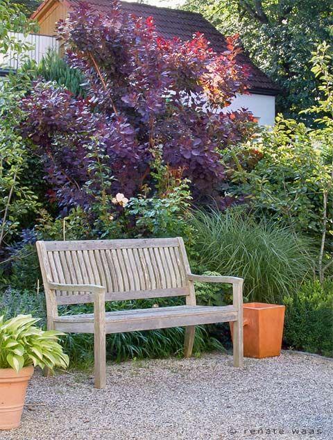 gehölze im vorgarten pflanzung mit sichtschutz hecke, frei,