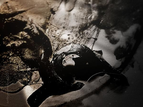 Something Sneaked Into my Dream Dark Photoart  by mimulux patricia no