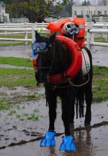 I'm the horse hahahahaha