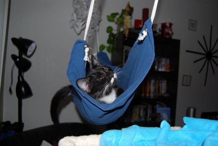 Pillowcase Cat Hammock- this looks cheaper and more comfy than buying a new bed for them