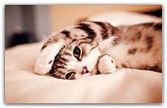 Кошка в доме: уход, кормление и гигиена Когда в Вашем доме появляется кот или кошка, то необходимо сразу подготовиться к глобальным переменам в своей повседневной жизни. Кошка станет настоящим другом, который будет отвечать Вам лаской и нежностью. Именно поэтому стоит с большой серьезностью отнестись к ... http://c.cpl1.ru/7kNM