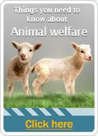 Things you need to know about: Animal Welfare
