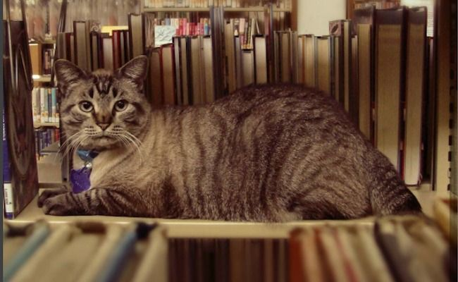 Success! Library Cat Won't Be Evicted  | Care2 Causes