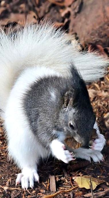 Downloading - 40% complete. Do not turn off your squirrel