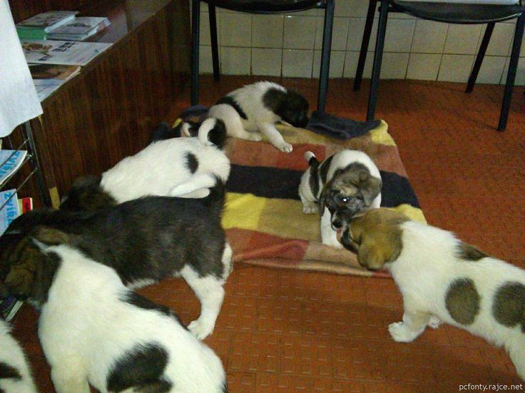 waiting for vaccination in veterinary surgery I.
