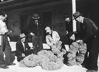 HellenicGenealogyGeek.com - Family History Research Tools for Greek Genealogy: Photograph - 1944 Tarpon Springs, Florida - Greek-American Deep Sea Sponge Fisherman Selling Their Sponges