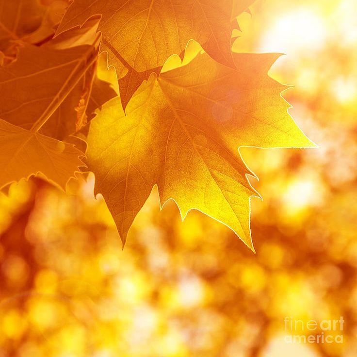 Осенние обои. Обсуждение на LiveInternet - Российский Сервис Онлайн-Дневников