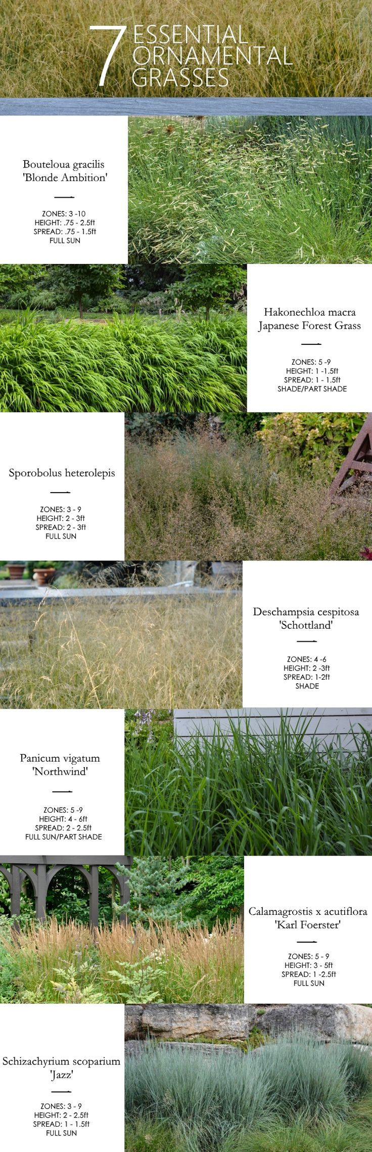 Ornamental grasses zone 5 - 7 Essential Ornamental Grasses Thinking Outside The Boxwood