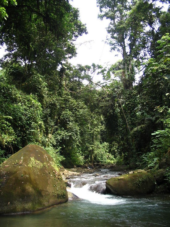 Darien National Park, Province of Darien, Panama. Inscription in 1981. Criteria: (vii)(ix)(x)