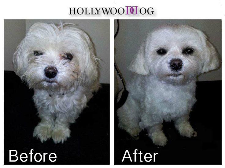 Hollywood Dog Grooming Dublin