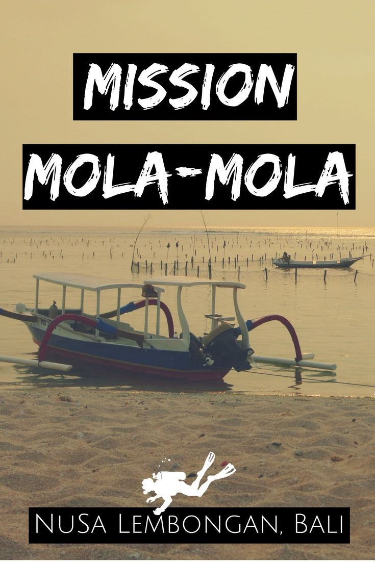 Mission Mola-Mola in Nusa Lembongan, Bali, Indonesia – Scuba Diving with Sunfish – World Adventure Divers – Read more on https://worldadventuredivers.com/2015/11/16/mission-mola-mola-nusa-lembongan-bali/