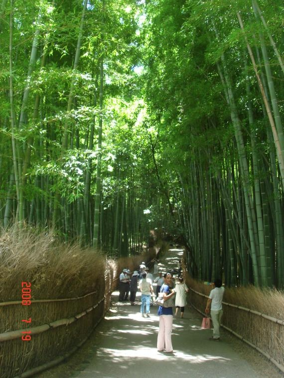 TENRYU-JI SHRINE'S BAMBOO TRAIL