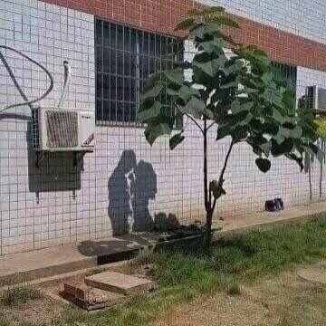 木がリア充してる!!