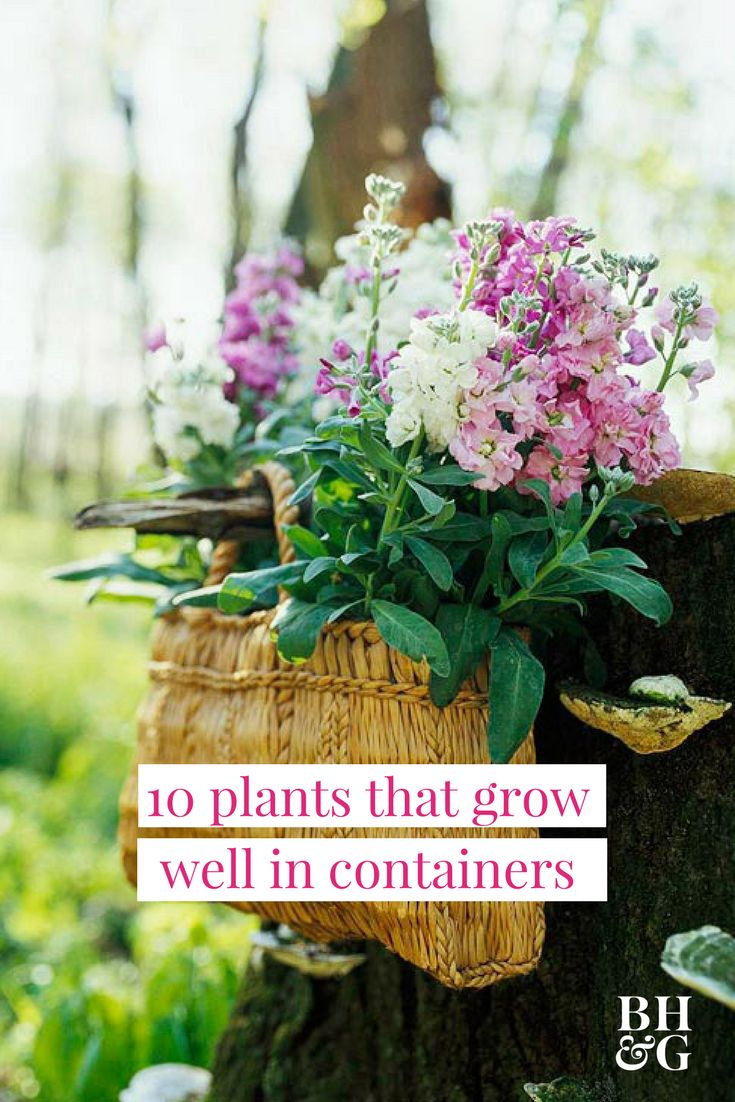 If you don't have a large yard or live in an apartment, enjoy the beauty of flowers and growing plants in a container garden. Check out our favorites that will thrive in small containers with just potting soil and regular watering! #containergarden #containergardeningideas #gardening