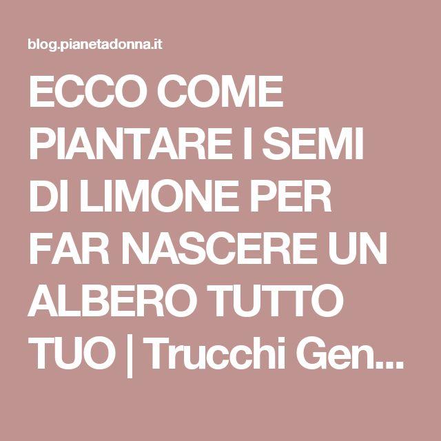 ECCO COME PIANTARE I SEMI DI LIMONE PER FAR NASCERE UN ALBERO TUTTO TUO | Trucchi Geniali
