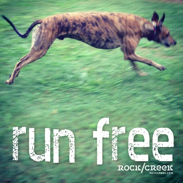 Run free #KEEN #walkthatdog: Inspiering Quotes, Hands, Doggies, Free Rockcreek, Rockcreek Inspiration, Boston Strong, Holidays Quotes, Quotes Success, Inspiration Quotes