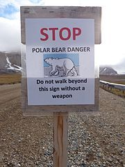 To be legaly allowed to walk around the Svalbard area, and outside the town outskirts of Longyear city, you will need to carry a weapon for self defence.