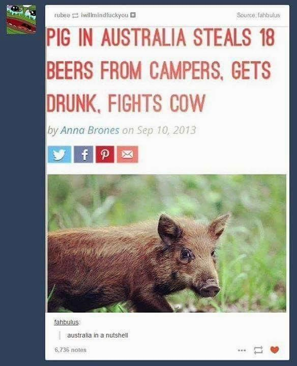 Australia in an nutshell  #dank #boar #australia #meme #memeoftheday #beer #drunk #genius #18 #pig #cow #fight #wtf #randomfact #random #uwotm8Australia in an nutshell  #dank #boar #australia #meme #memeoftheday #beer #drunk #genius #18 #pig cow fight wtf randomfact random uwotm8