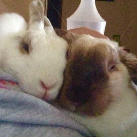 Rachael Stolnik's loved up couple Snowy and Skittles say  #everybunnyneedssomebunnytolove
