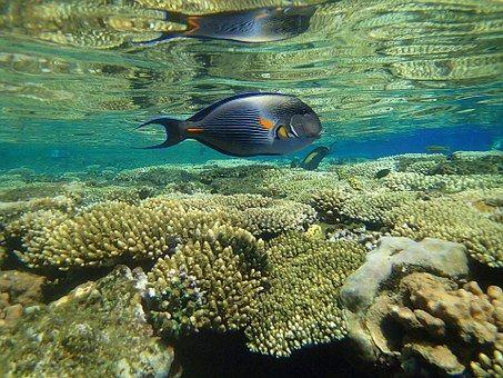 Ψάρια, Θάλασσα, Καλοκαίρι, Παραλία
