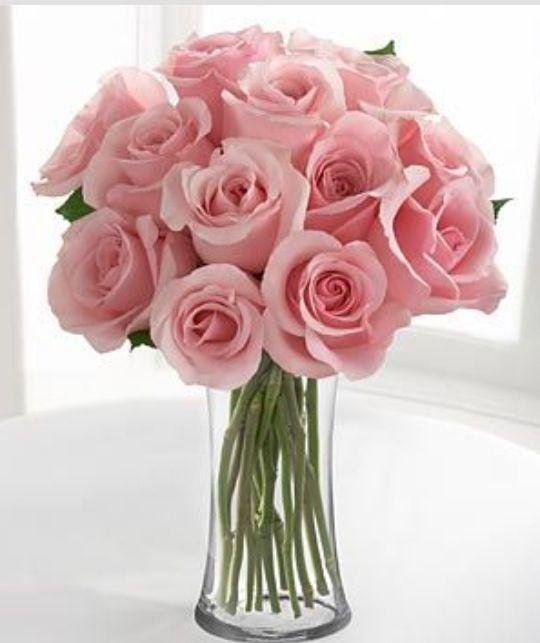Pink Roses = Sweetness, Grace, Joy, Admiration
