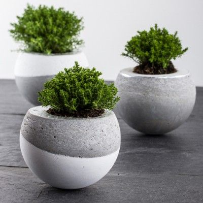 DIY Vasen aus Beton (2 Stück)