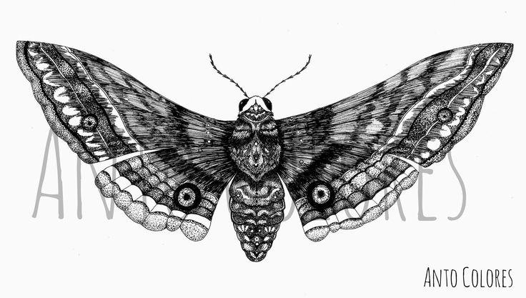 #moth #polilla #mariposa #nocturna #antocolores #illustration #ilustracion  www.instagram.com/anto.colores https://www.facebook.com/AntoColores/?ref=aymt_homepage_panel