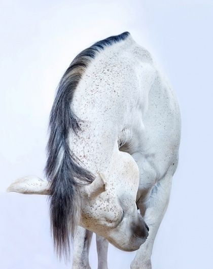 'All the Wild Horses' on the Behance Network