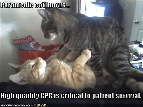 Cat Pride Cpr Video