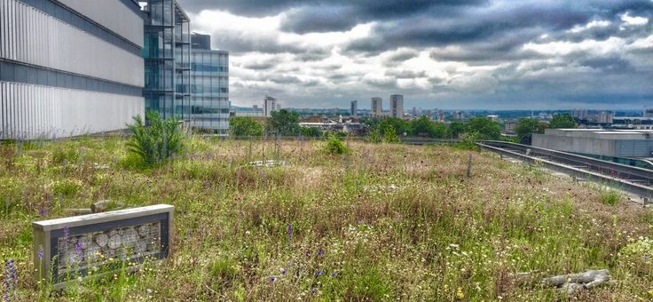 Green roof designed for biodiversity - London